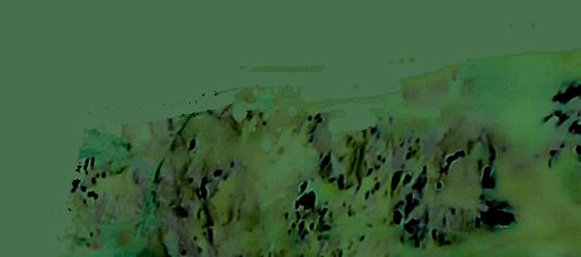 ページイメージ